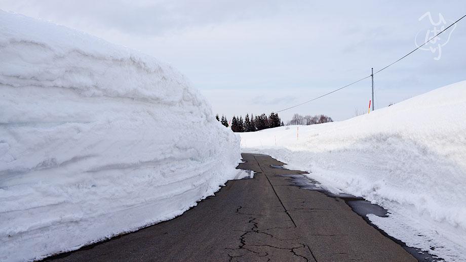 新潟の雪2020